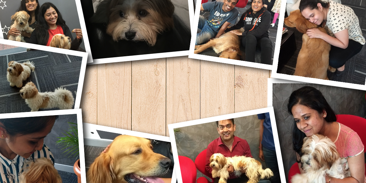 Day Out with Our Furry Friends #Animalcollection #Shoutout
